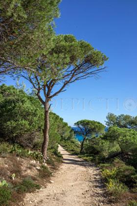 Saint Tropez Peninsula, Provence, 2013