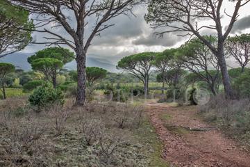 La Plaine des Maures, Provence, 2014
